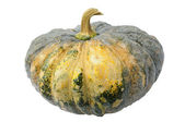 Green pumpkin — Stock Photo
