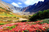 Summer landscape of mountains and fields of Kamchatka — Stock Photo