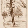 Vintage sketchbook page with trees sketch — Stock Photo #37551029