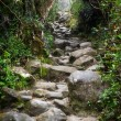 Rocky Trail at Mount Kinabalu in Sabah, Malaysia. — Stock Photo #47974179