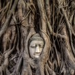 Head of Buddha Statue in the Tree Roots, Ayutthaya, Thailand — Stock Photo #49461581
