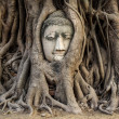 Head of Buddha Statue in the Tree Roots, Ayutthaya, Thailand — Stock Photo #49461585
