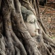 Head of Buddha Statue in the Tree Roots, Ayutthaya, Thailand — Stock Photo #49461597
