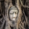 Head of Buddha Statue in the Tree Roots, Ayutthaya, Thailand — Stock Photo #49461719