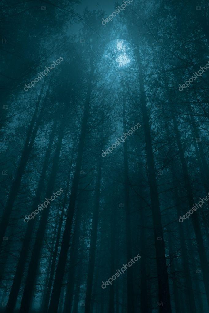 Фотообои Foggy forest in a full moon night