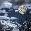 Full moon — Stock Photo #33562793