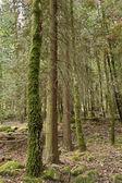 Woods — Stock Photo