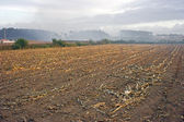 Corn crop remains — Stock Photo