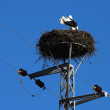 Nest of stork — Foto Stock