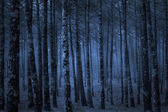 Misty pine woods — Stock Photo