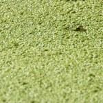 Frog 3, camouflage — Stock Photo #34191419