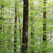 Dense green forest — Stock Photo