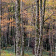European Woods during autumn — Stock Photo