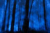 Blue foggy pine woods — Stock Photo