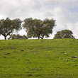 Stock Photo: Alentejo plain