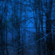 Blue forest — Stock Photo