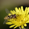 Colorful fly in spring — Stock Photo