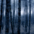 Stock Photo: Foggy forest