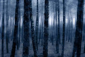 Foggy forest — Stock Photo