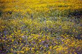 Meadow background — Stock Photo