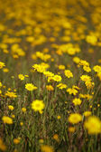 Spring meadow background — Stock Photo