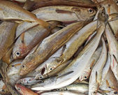 Färsk fisk — Stockfoto