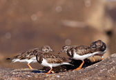 Sea birds eating — Stock Photo