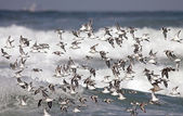Flock of sea birds flight — Stock Photo