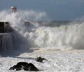 Tsunami — Stock Photo