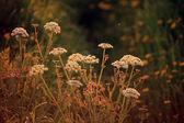 European meadow at dusk — Stockfoto