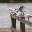 Seagulls resting — Stock Photo