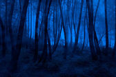 Bosco nebbioso blu — Foto Stock