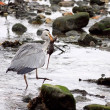 Stock Photo: Heron eats mouse