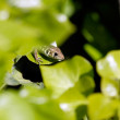 Hidden lizard — Stock Photo