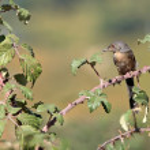 Mountain little bird — Stock Photo