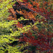 Green and red forest — Stock Photo