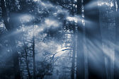 лес в период полнолуния — Стоковое фото