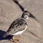 ������, ������: Sea bird