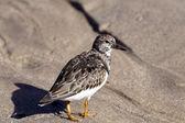Sea bird — Stock Photo