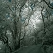 Stock Photo: Infrared forest road