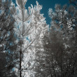 Infrared trees — Stock Photo #36983261