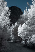 Infrared mountain road — Stock Photo