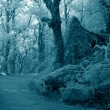 Infrared forest road — Stock Photo
