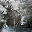 Infrared country road — Stock Photo #37369241