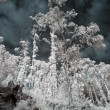 Infrared trees — Stock Photo #38210755