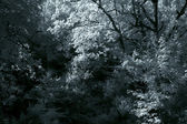 Infrared dense woods — Stock Photo