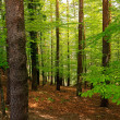 Green woods — Stock Photo