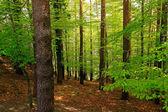 Green woods — Stock Photo
