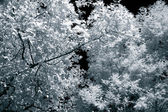 Infrared leaves and branches — Stock Photo
