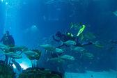 Lisbon Oceanarium — Stock Photo